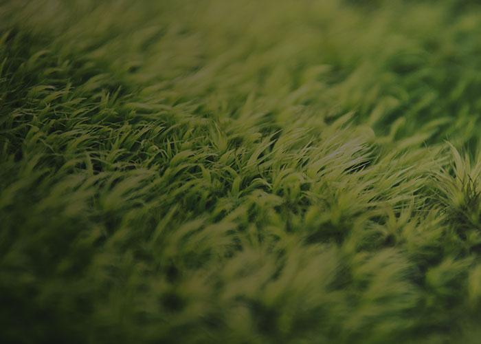 Cómo quitar manchas de hierba